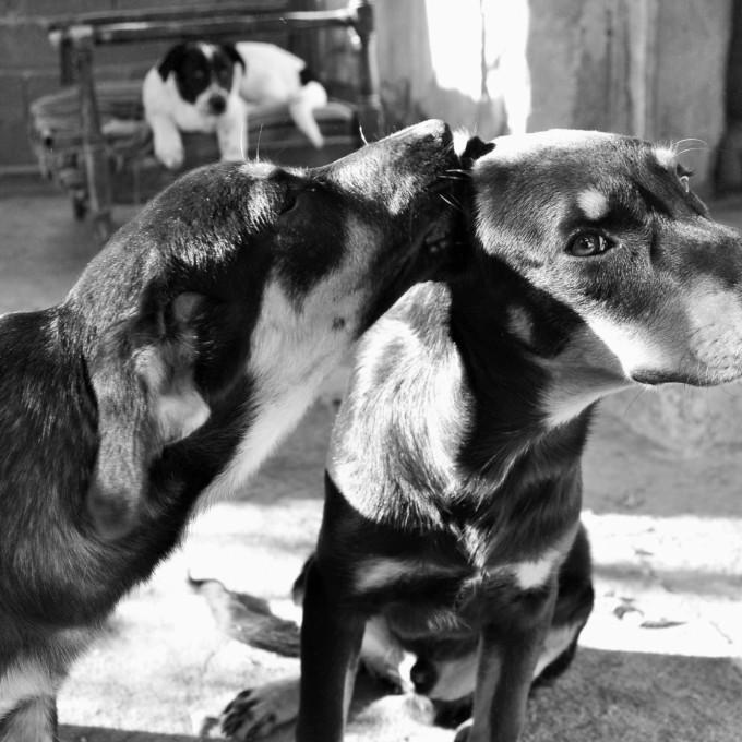Haus der Hunde